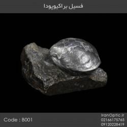 فسیل براکیوپودا - کد B001