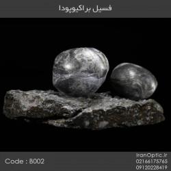 فسیل براکیوپودا - کد B002