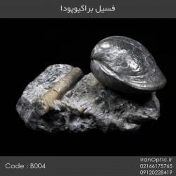 فسیل براکیوپودا - کد B004