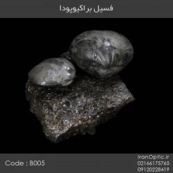 فسیل براکیوپودا - کد B005